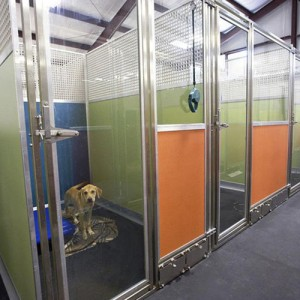 new-dog-kennels-square